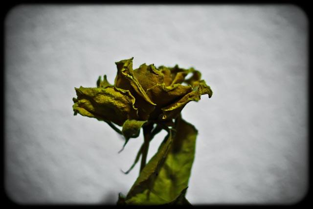 La enfermedad y la muerte - Rosa